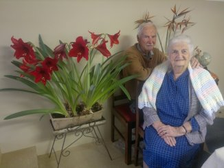 290920111 Mom, Dad & Amaryllis