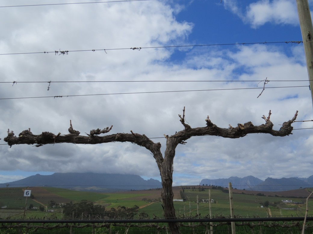 Pruning - Spur